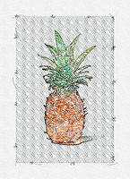 Rough Sketch of Pineapple by Ahmet Asar